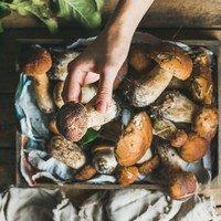 II. Mikoterápia: a gombák szerepe az egészségmegőrzésben és terápiás kezelésekben