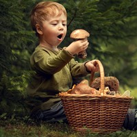 Gombák: a NaJa Forest termékcsaládhoz alapanyagként felhasznált gombák bemutatása