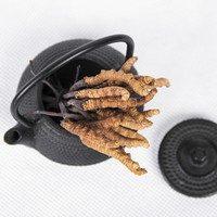 IV. 5. Kínai hernyógomba (Cordyceps sinensis) a vitalitás és a termékenység gombája