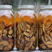 Útmutató az egészséges élethez a gombák erejével.
