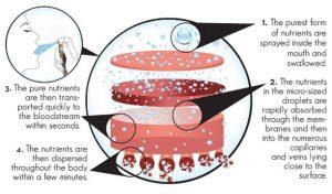 A szájon át történő felszívódás sokkal hatékonyabb, mint a tápcsatornán keresztül történő hasznosulás, ugyanis a tápanyagok gyorsabban szívódnak fel a száj bukkális nyálkahártyáján keresztül.