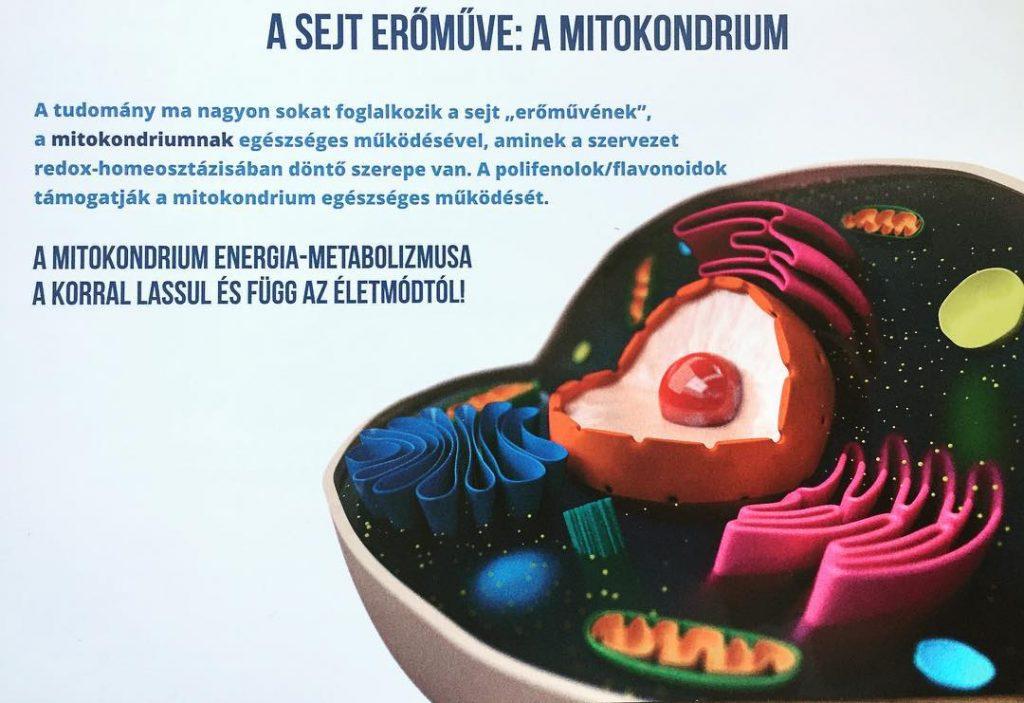 A sejt erőműve: a mitokondrium
