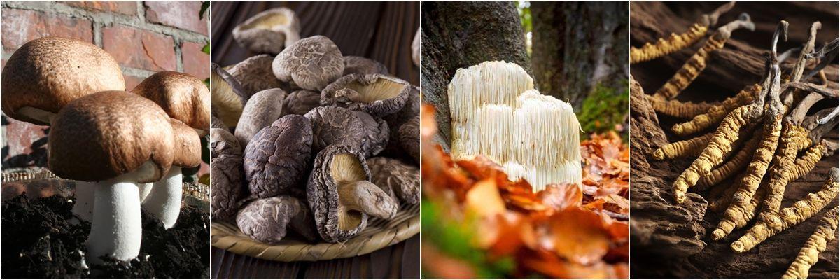 Milyen tápanyagok forrásai a gombák?