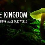 Tálas Annamária, The Kingdom: How Fungi Made Our World című film rendezője